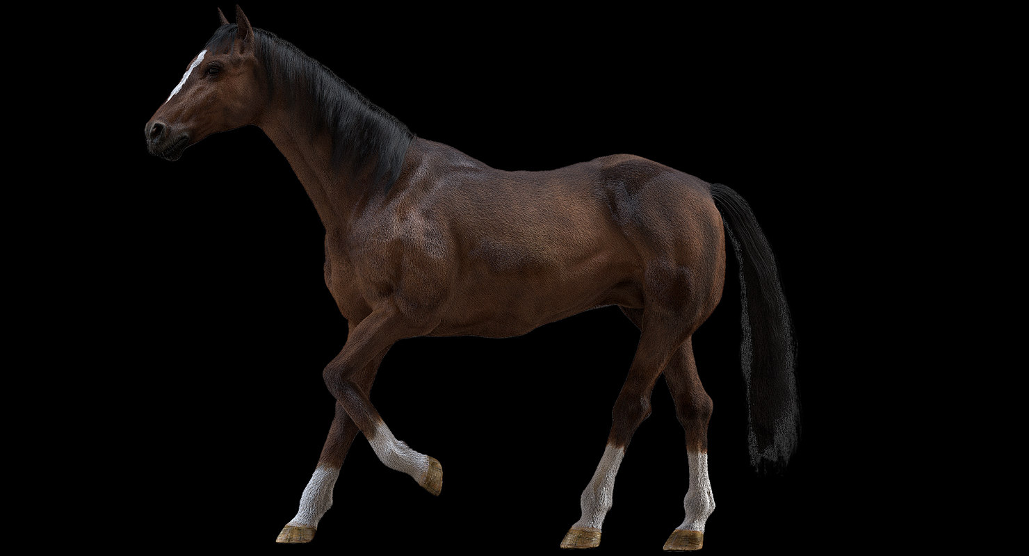 3D horse rigged fur model