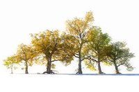 3D autumn trees pack 6