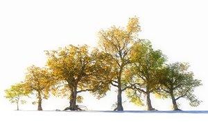 3D autumn trees pack 6