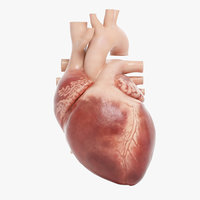 Human Heart Animated (Pro Version)