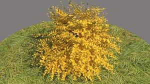 spiraea japonica golden princess 3D model