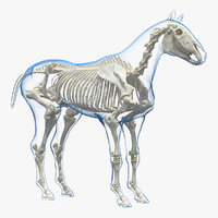horse envelope skeleton neutral 3D model