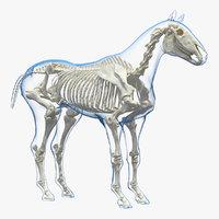horse envelope skeleton neutral 3D model