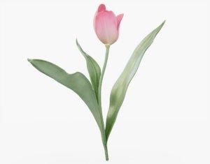 tulip pink 3D