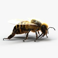 3D model honeybee fur animation 2