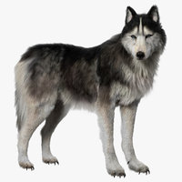 Siberian Husky (Rigged) (Fur)
