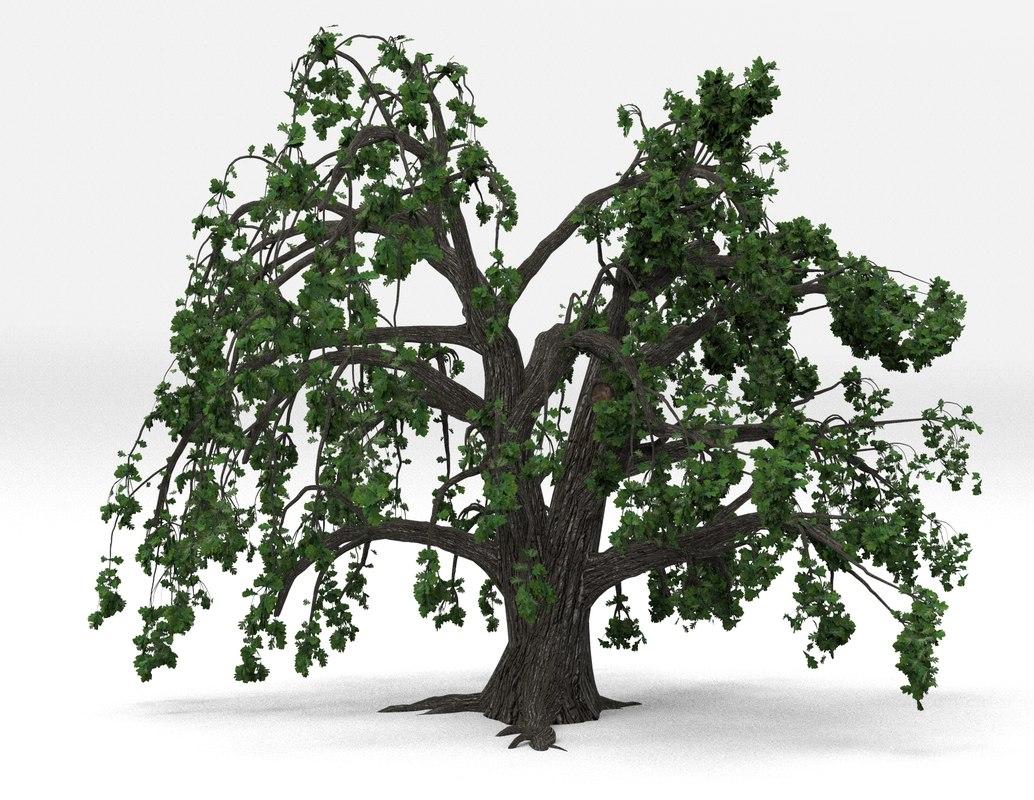 3D tree oak old spring model
