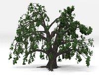 Old oak spring 3D model