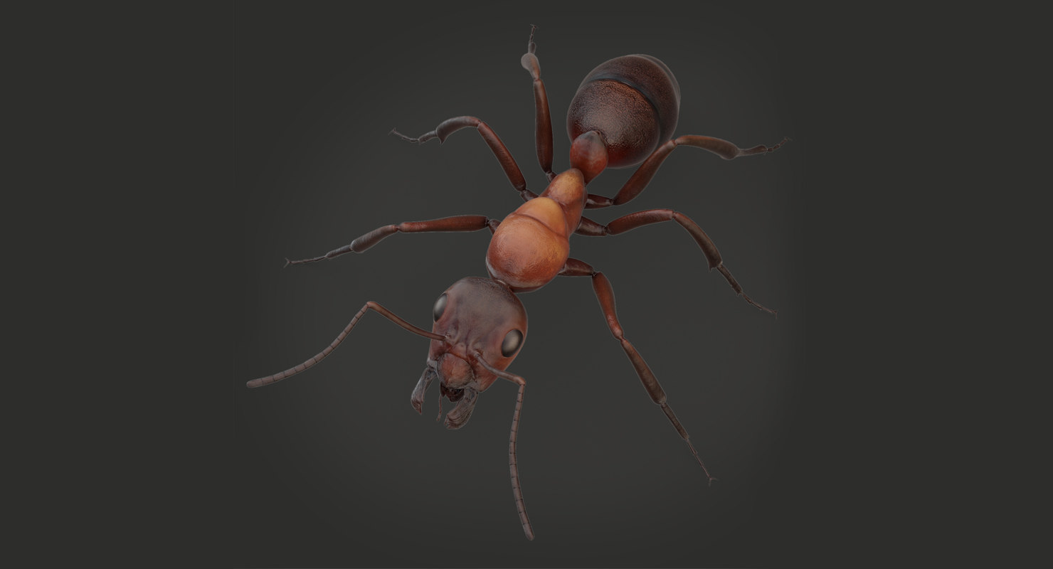 ant animation 3D model