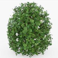 3D shrub