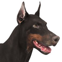 3D doberman scanned archviz