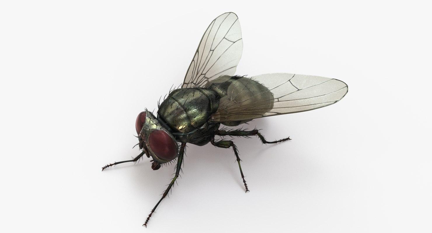 housefly 2 3D model