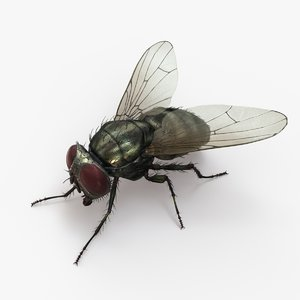 3D model housefly rigged animations 2