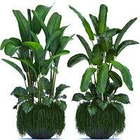 loft exotic plants model