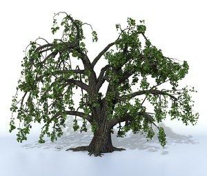 3D model tree oak old summer