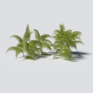 3D fern pack