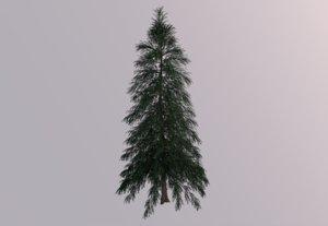 abies fraseri tree 3D model