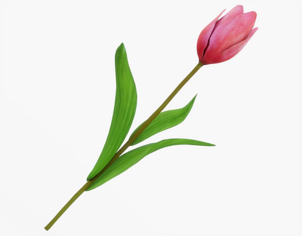 3D tulip pink