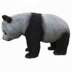 rigged panda bear fur model