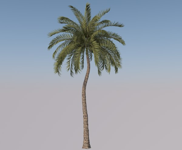 beach palm tree 3D model