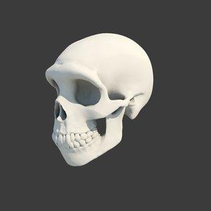 neanderthal skull 3D