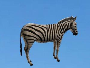 3D zebra animal