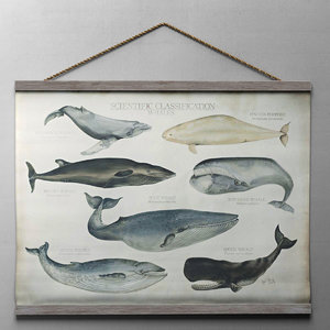 3d model scientific whale tapestry