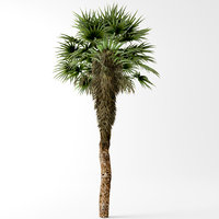 chinese palm 3D