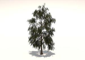 3D birch tree