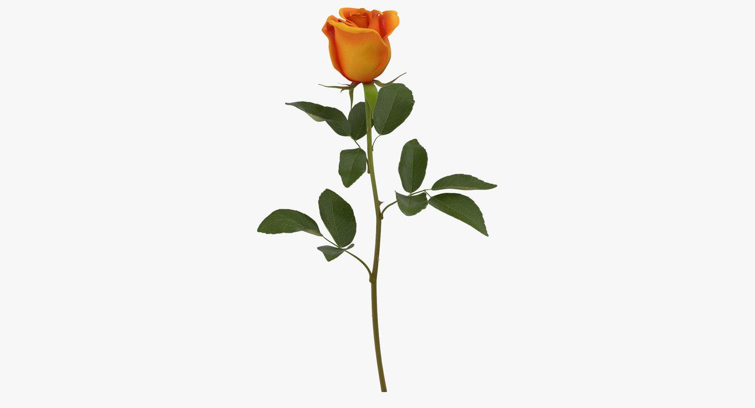 rose orange - 3D model