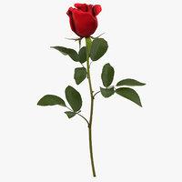 rose red - 3D