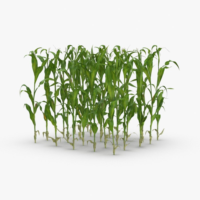 3D corn-stalks-and-patch---patch model