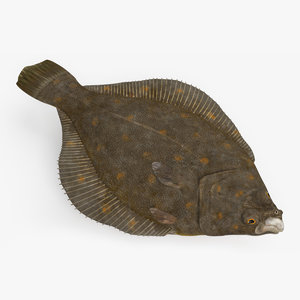 flatfish animation 3D model