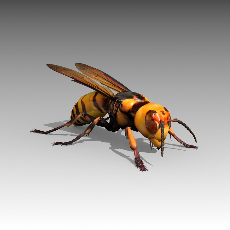 3D giant hornet