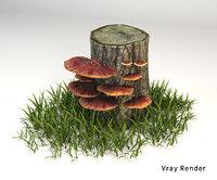 Ganoderma tsugae mushroom