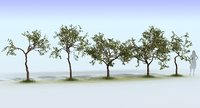Apple Tree Set
