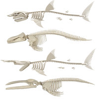killer whale skeleton shark 3D