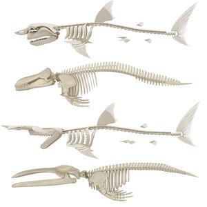 killer whale skeleton shark 3D