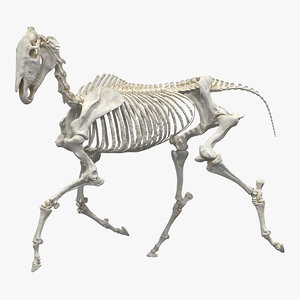 horse skeleton running pose 3D