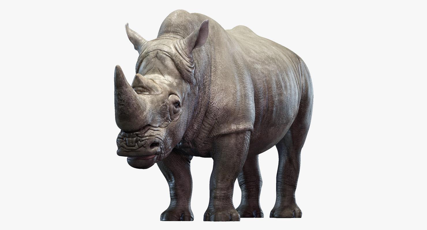 3D big rhino