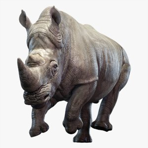 big rhino animation 3D model