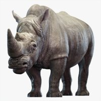 3D big rhino rigged