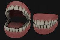 3D model teeth gums
