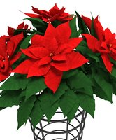 Vase with poinsettia