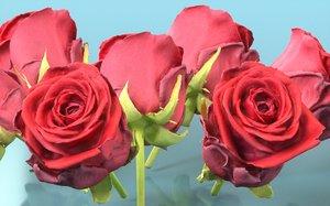 china chinese rose 3D