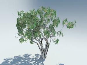 3D tree aloe bainesii