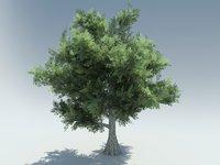bald cypress 3D