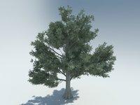 3D bald cypress model
