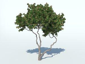 3D bougainvillea