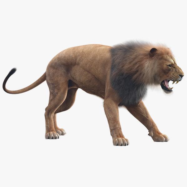 lion animation fur 3D model